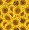 Blank Quilting Country Paradise Sunflowers Yellow