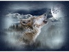 Hoffman Fabrics Call of the Wild Moonstruck Wolf Panel