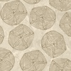 Maywood Studio Turtle Bay Sand Dollars Sandy Brown
