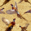 Blank Quilting Pheasant Run Pheasants