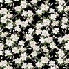 Blank Quilting Magnolia Mania Small Floral Lattice Black