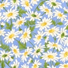 Maywood Studio Fresh As A Daisy Daisies Sky Blue