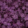 In The Beginning Fabrics Garden Delights III Baby's Breath Fuchsia