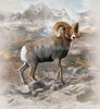 Hoffman Fabrics Call Of The Wild Big Horn Sheep Panel